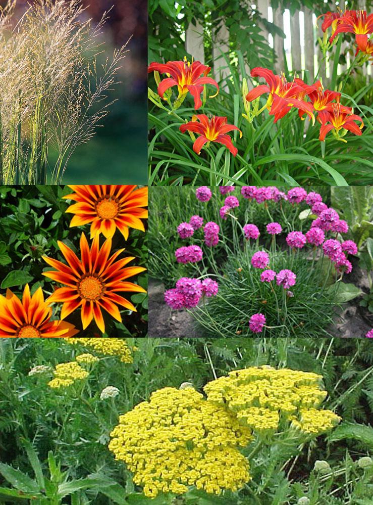 Coastal Plants to Consider for Your Grande Dunes Garden